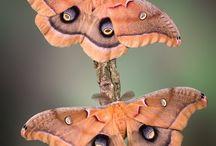 Pastel moths
