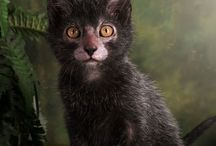 The Lykoi Cat / The weird and beautiful Lykoi Cat or Werewolf Cat.  $3000 each.