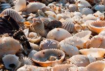 Beach pebbles & shells