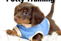 Train a dashund