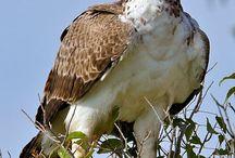 Aves e passáros