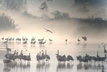 Israel Birds
