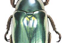 Neato Beetles