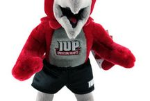 IUP / by Patti Simmons