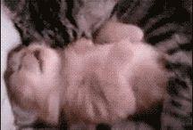 Kattungar