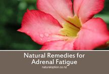 Adrenal Fatigue / Natural Remedies and information about Adrenal Fatigue