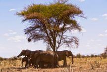 Wycieczki do Tanzanii / Tanzania to przede wszystkim dzikie zwierzęta, ciekawe plemiona, wspaniałe widoki i najsłynniejsze rezerwaty. Usłysz dźwięki Afryki i odkryj magię podróżowania z Dragon Adventures