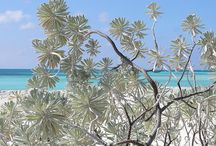 Kuba Strand / Cuba Beach