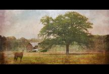 Landscapes / Original photographic fine art featuring landscapes