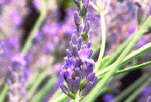 Herbal Medicine Tips