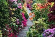 giardini fiori