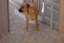 Biggish Doggies - Paco II / This is Paco II, named as II because he so closely resembles another Paco who was adopted.