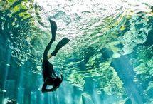 Underwater/Aquarium