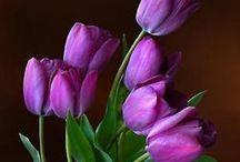 Flowers for art