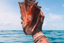 "Sea Shells / ""Every seashell has a story to tell."""