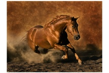 Gorgeous Horse & Western Style Posters