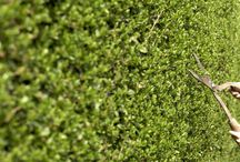 Landscaping Ideas  / Various diy landscaping ideas