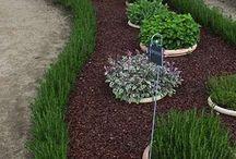 Piante e giardino