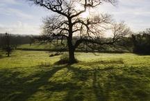 Beautiful Falfield, Gloucestershire