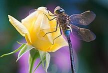 Dragonflies - My Fav / by Kelly Jo Cowles