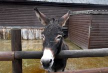 Dorset UK Farm Animals / Photos of farm animals (and people's pets!) taken on a recent holiday in UK:) / by Mary Tipping