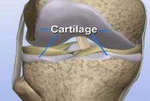 Salute ossa / Come migliorare la cartilagine