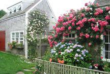 Sue's Snapshots- Nantucket Idyll