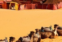Tuareg Caravans