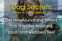 Dog Secrets - Facts about Dogs / Find Interesting Fats About Dogs