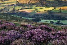 Foto England
