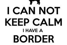 Chiens border collie