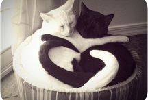 Cats, Hearts, and Love / A perfect mix of cats showing love in many ways. / by Manhattan Cat Specialists