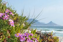 Cape Town, my home