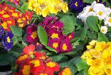 Bahçe çiçek / Akdeniz iklimine uygun bahçe ve ev çiçekleri