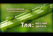 Тля, муравьи, комары что делать?