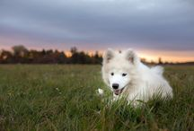 Pet Portraits - photos of dogs and cats for inspiration and ideas
