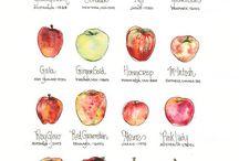 -food illustrations-