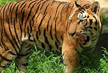 Animal Sanctuaries in Mizoram / Sanctuariesindia: Here you can get information about all Animal Sanctuaries, National Parks, Forests in Mizoram, India.