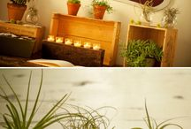 My Air Plant Project / by Luke Neumayr