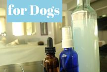 Essential Oils - for dogs