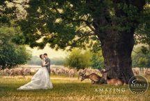 Wedding - Art