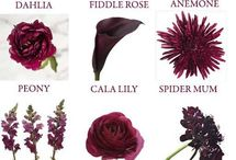 burgandy floral