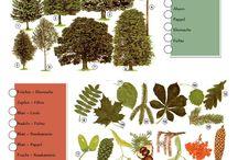 Nature for preschoolers