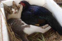 pets ed animali