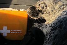 Zeehondenzorg / Ons doel is om zieke en gewonde dieren weer gezond en aangesterkt terug naar zee te brengen. Wij zijn inmiddels zeer ervaren in de opvang en rehabilitatie van zeehonden. Dit bord geeft een kijkje in onze expertise.