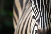 Safari / by Kristin White