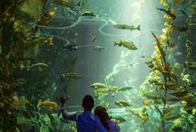 Ripley's Aquarium of Canada Photography / from ~focusphotography.ca