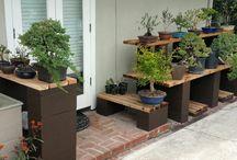 Bonsai outdoor displays