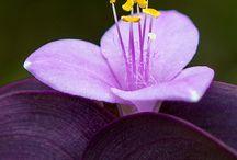 Flowers (Çiçekler)
