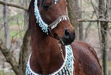 Pferde/ Tiere